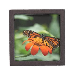 Caja de regalo superior de la mariposa de monarca caja de recuerdo de calidad