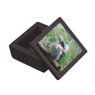 Caja de regalo superior de risa de Kookaburra Cajas De Recuerdo De Calidad