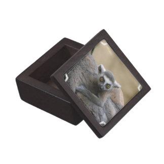 Caja de regalo superior del bebé del Lemur Cajas De Joyas De Calidad