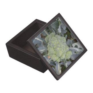 Caja de regalo superior del bróculi caja de joyas de calidad