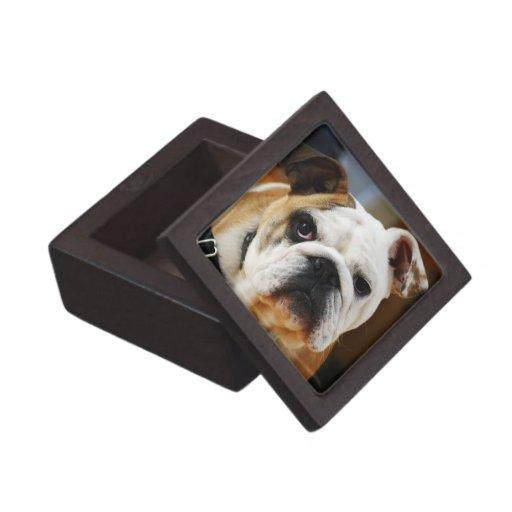 Caja de regalo superior del dogo cajas de joyas de calidad