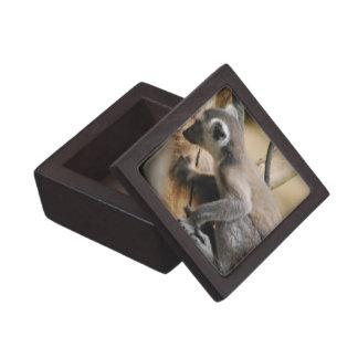 Caja de regalo superior del Lemur del bebé Cajas De Joyas De Calidad