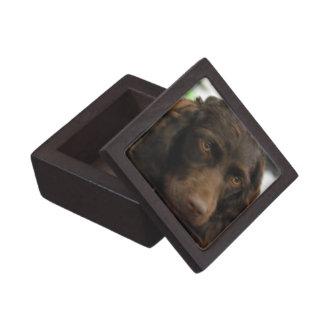 Caja de regalo superior del perro de aguas de Boyk Caja De Regalo De Calidad