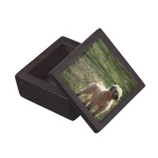 Caja de regalo superior del perro pastor inglés vi cajas de joyas de calidad