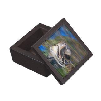 Caja de regalo superior - modificada para requisit cajas de regalo de calidad