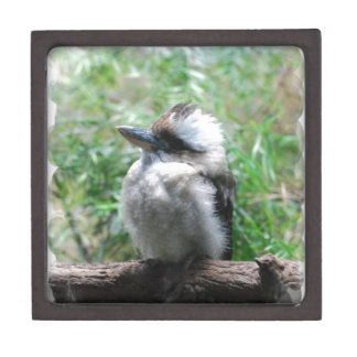 Caja de risa de Kookaburra Caja De Recuerdo De Calidad