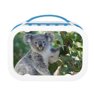 Caja del almuerzo australiana linda de la koala