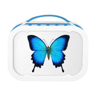 Caja del almuerzo azul de la mariposa de Papilio U