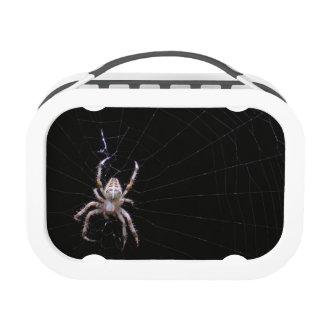 Caja del almuerzo cruzada del ~ de la araña