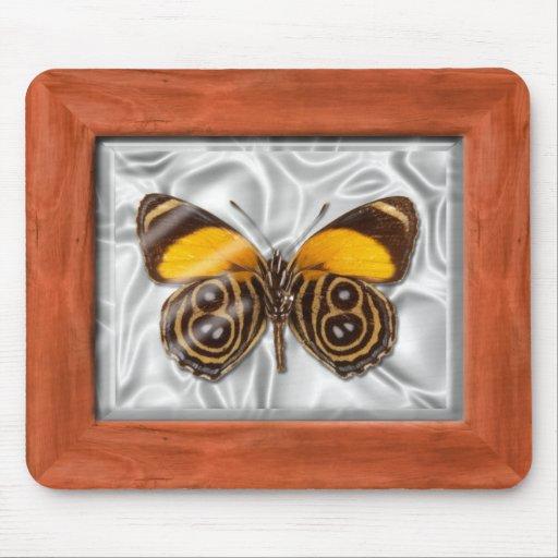 Caja del espécimen - mariposa alfombrillas de ratón