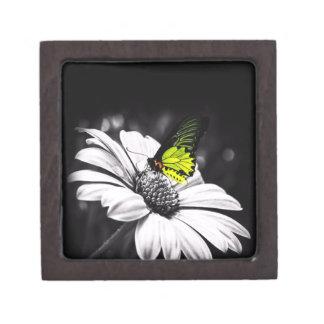 caja del jewlery de la mariposa caja de regalo de calidad