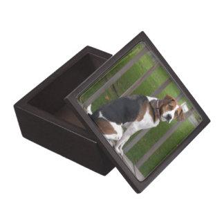 Caja del raposero inglés cajas de recuerdo de calidad