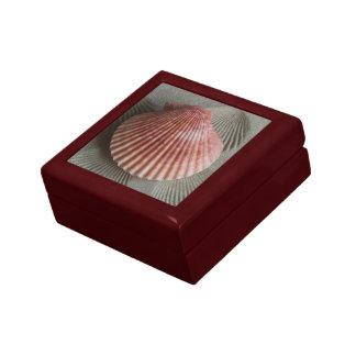 Caja del recuerdo del Seashell Cajas De Regalo