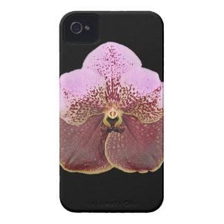 Caja del teléfono celular de la orquídea iPhone 4