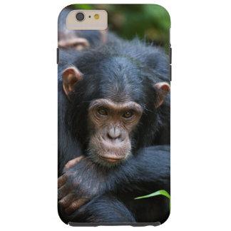 Caja del teléfono celular del chimpancé de Kibale Funda De iPhone 6 Plus Tough