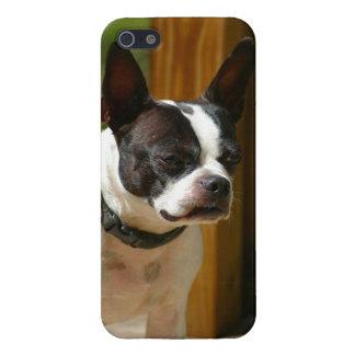 Caja del teléfono de Boston Terrier I iPhone 5 Fundas