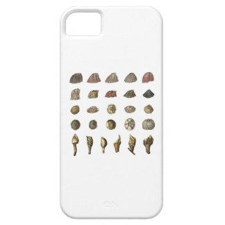 Caja del teléfono de la lapa i de Darwin iPhone 5 Carcasa