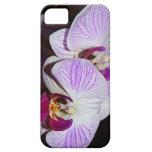 Caja del teléfono de la orquídea iPhone 5 protectores