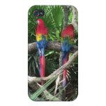 Caja del teléfono de los Macaws del escarlata para iPhone 4/4S Carcasa