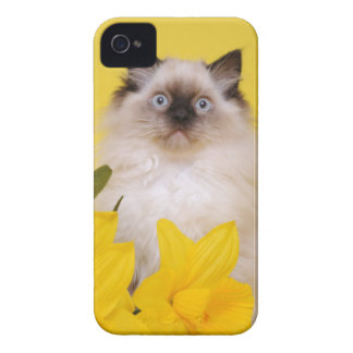 Caja del teléfono de Ragdoll Blackberry Case-Mate iPhone 4 Cárcasas