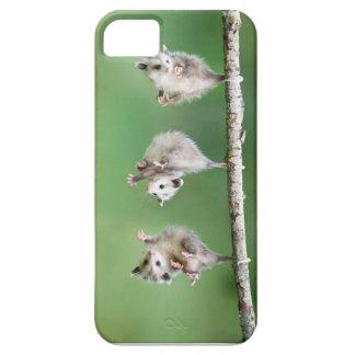 Caja del teléfono del amante del oposum iPhone 5 funda