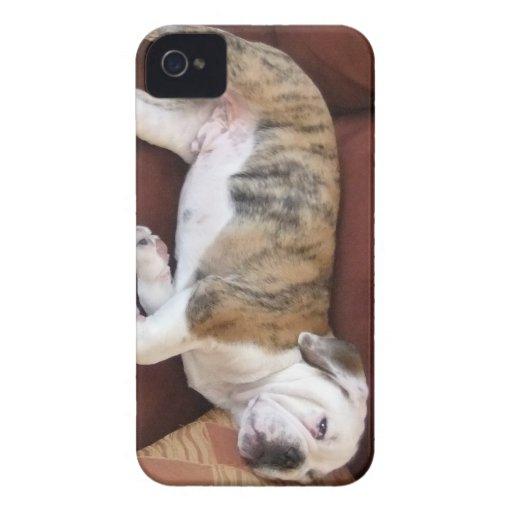 caja del teléfono del dogo iPhone 4 Case-Mate cárcasas