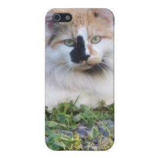 caja del teléfono del gato iPhone 5 funda