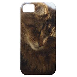 Caja del teléfono del mascota del gato de Coon de iPhone 5 Fundas