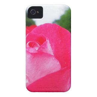 Caja floral color de rosa rosada del iPhone 4/4s iPhone 4 Carcasa