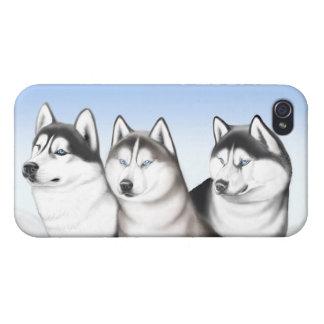 Caja fornida de la mota de los perros del Malamute iPhone 4 Carcasas