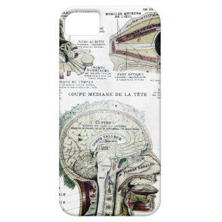 Caja francesa de la casamata de la anatomía funda para iPhone SE/5/5s