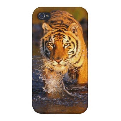 Caja fresca del teléfono del tigre iPhone 4/4S funda