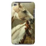 Caja gris de iTouch del caballo de Eventing iPod Touch Case-Mate Carcasa