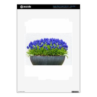 Caja gris de la flor del metal con los jacintos de iPad 3 pegatina skin