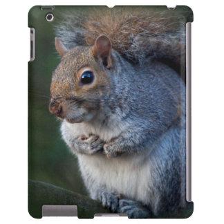 Caja gris del iPad de la ardilla Funda Para iPad
