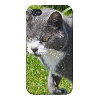 Caja gris y blanca del iphone 4 del gato iPhone 4 cárcasas