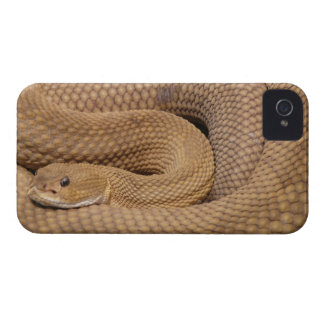 Caja intrépida de Blackberry de la impresión de la iPhone 4 Case-Mate Coberturas
