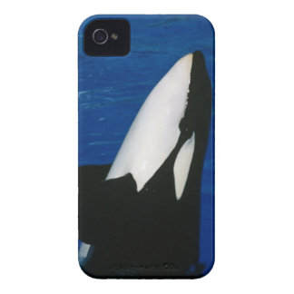Caja intrépida de Blackberry de la orca iPhone 4 Protectores