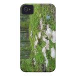 Caja intrépida de Blackberry de la seta del bosque Case-Mate iPhone 4 Carcasa