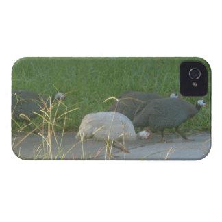 Caja intrépida de Blackberry de las aves de Guinea Funda Para iPhone 4 De Case-Mate