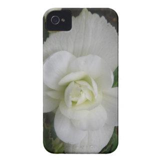 Caja intrépida de Blackberry del clavel blanco Funda Para iPhone 4