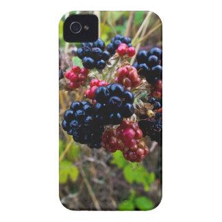 Caja intrépida de Blackberry iPhone 4 Coberturas