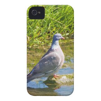 Caja intrépida de la paloma de la zarzamora funda para iPhone 4 de Case-Mate