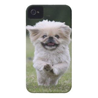 Caja intrépida de la zarzamora del perro de carcasa para iPhone 4