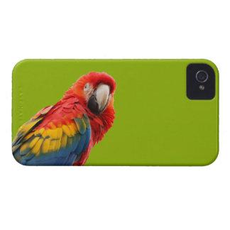 Caja intrépida de la zarzamora hermosa del pájaro iPhone 4 funda