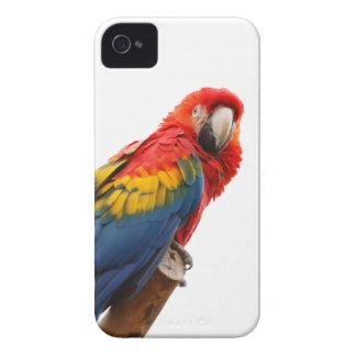 Caja intrépida de la zarzamora hermosa del pájaro iPhone 4 protector