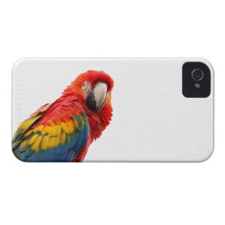 Caja intrépida de la zarzamora hermosa del pájaro iPhone 4 protectores