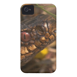 Caja intrépida principal de Blackberry de las Case-Mate iPhone 4 Protector