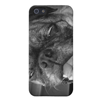 Caja linda de la mota del perro del barro amasado iPhone 5 protector