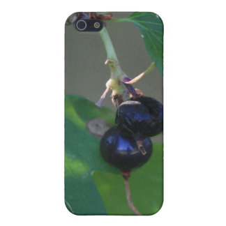 Caja negra de la mota de Iphone 4/4s de las bayas iPhone 5 Carcasas